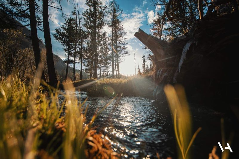 Горный ручей Tree Plant Nature Water Sky No People Day Outdoors Built Structure Sunlight Beauty In Nature Growth Architecture Tranquility Building Exterior Land Scenics - Nature Tranquil Scene Focus On Background Flowing Water