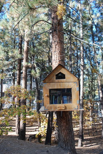 Take a book, leave a book. Nature Tree Architecture Beauty In Nature Big Bear Book, Branch Built Structure Day Forest Nature No People Outdoors Tranquility Tree Tree House Tree Trunk Wood - Material