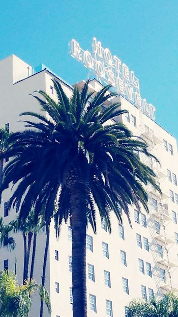 hotel Roosevelt Zebra Crossing Hollywood Hotel Roosevelt Tree Palm Tree Sky Architecture Building Exterior Close-up