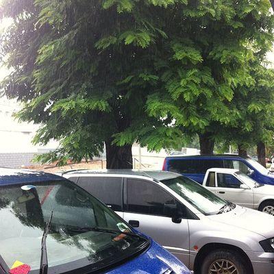 Rain is Rain Mufucc Rain Wizzycity Wizzynation