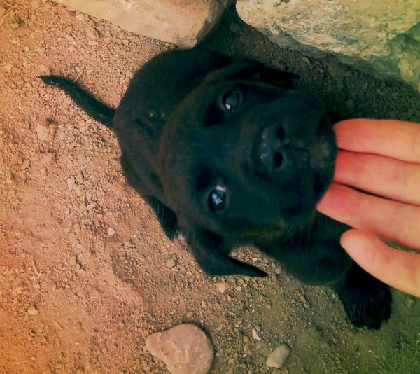 Playing With The Dog Sweet♡