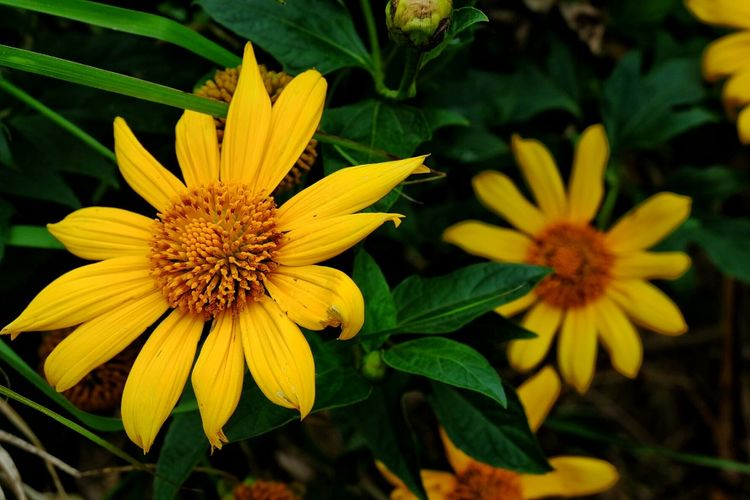 Close-up of yellow flowers growing on plant