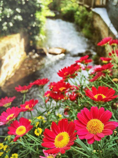 Flowers Flower Naturelovers Nature Nature_collection EyeEm Nature Lover EyeEm Best Shots EyeEm Water_collection Eye Em Nature Lover