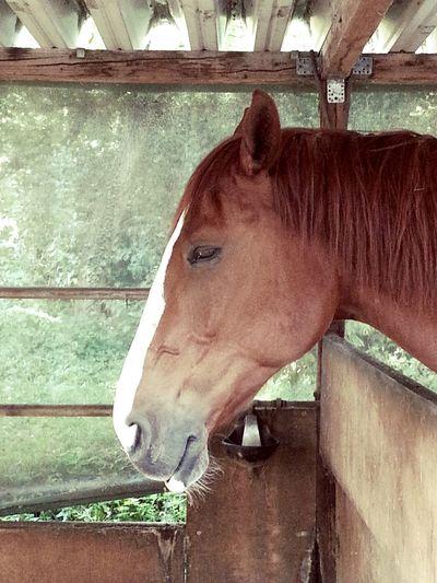 Horse Reitverein Darmstadt