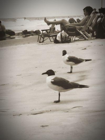 Beach Birds Coastal Life Outdoors Water Sand