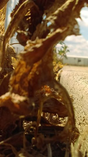 kicked to the curb Crispy Desert Growth Low Angle View Perspectives on Nature Saying Goodbye Summer Sun Tenacity Close-up Concrete Curb Day Dehydrated Dying Elderly Gold Colored Gone To Seed Heat Keeping Company Nature Size Is Relative Street Photography Summer Thorn Weed