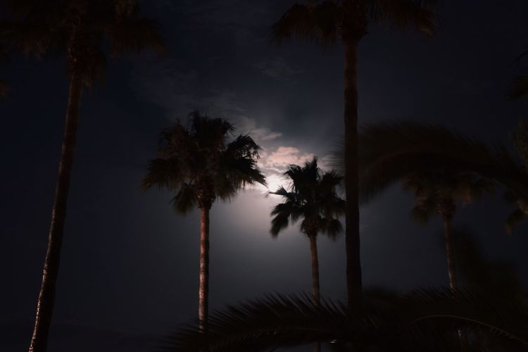 See the moon shine trough the palmtrees Palm Tree Tree Night Beauty In Nature Nature Silhouette Sky Outdoors Low Angle View Ibiza Dark Moon SPAIN