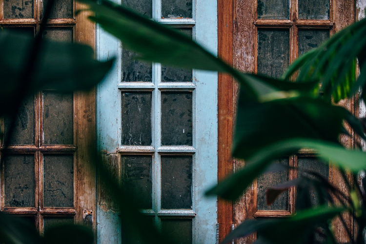 Blue wooden window weathered can be see through a Jungle. Brown wooden windows. Windows closed are covered with dirt and dust. Elegant Retro Architecture Building Building Exterior Built Structure Close-up Day Focus On Background Green Color House Leaf No People Outdoors Pattern Plant Plant Part Protection Safety Security Selective Focus Window Window Frame Wood - Material Wooden