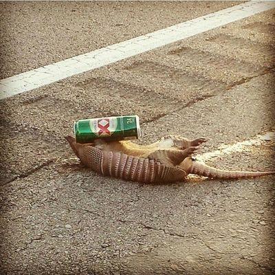 regram @roadkills_of_instagram2 Photo credit @carly.blair Roadkill Roadkillsofinstagram