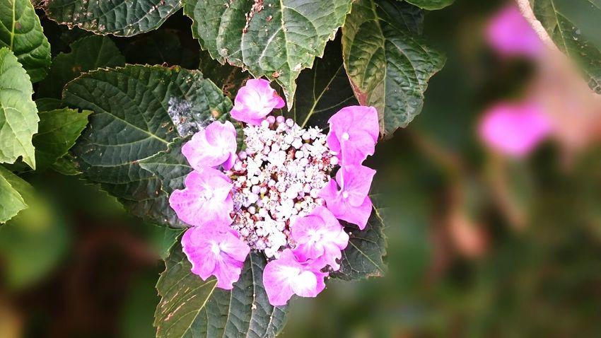 My Hobby Des Fleurs Fleurs Hobbyphotography Sony Xperia Z3 Flower Flowers Eyemflowerlover Wildflowers Secret Garden