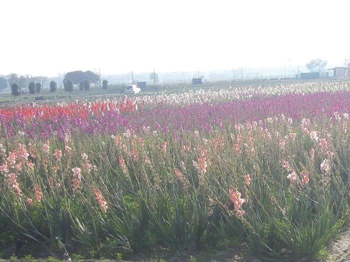 Growth Field