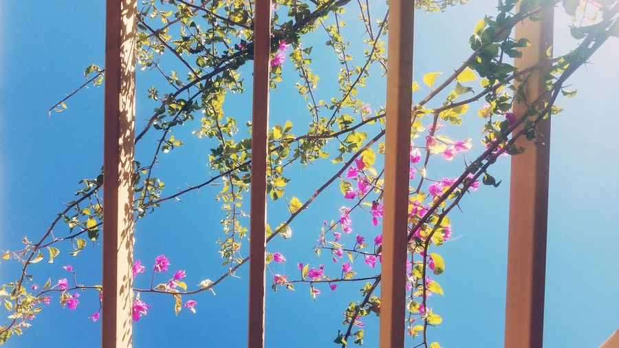 beauty Day Blue Outdoors Clear Sky Sky Nature No People Flower Beauty In Nature