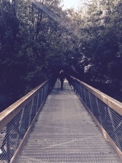 Beauty In Nature Bridge - Man Made Structure Connection Day Footbridge Full Length Growth Men Nature One Person Outdoors People Railing Real People Rear View Sky Standing Tasmaina Tasmania The Way Forward Tree