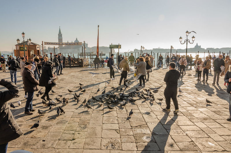 The pigeons of