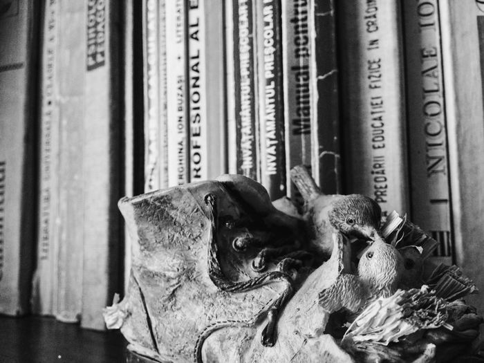 Backgrounds Books Close-up Day Mammal No People Part Of Selective Focus