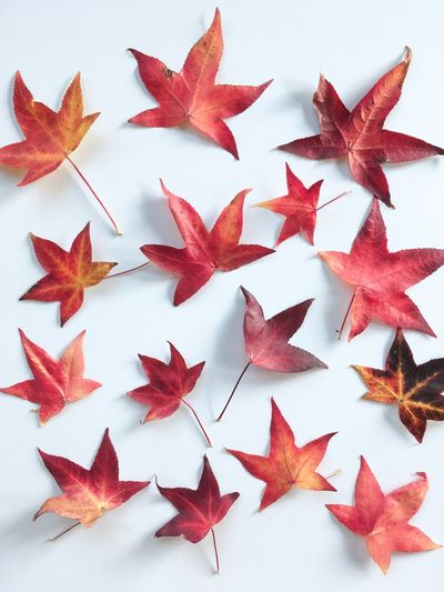 High angle view of autumn leaves on white background