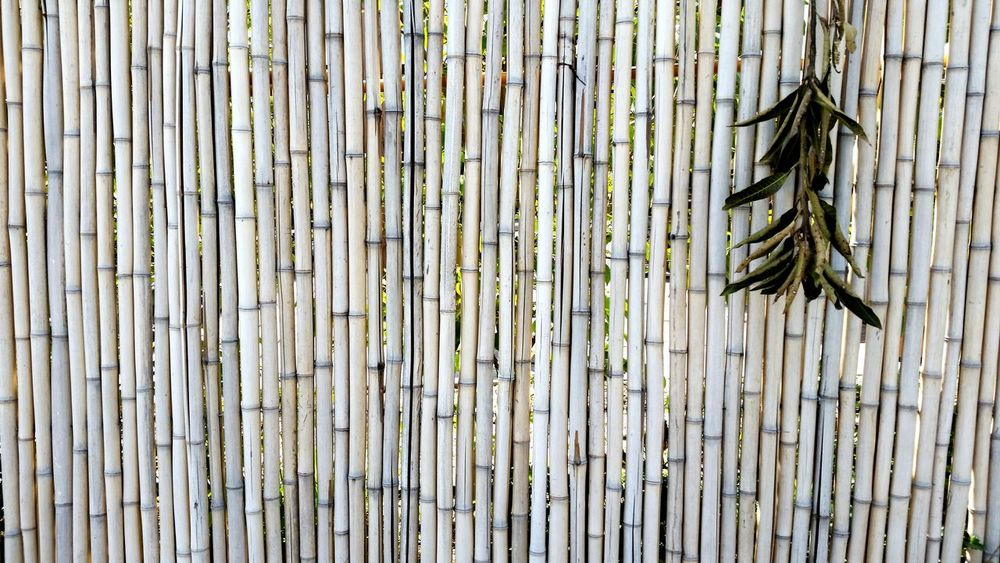 Outdoors Backgrounds Pattern Textured  Wood - Material Full Frame Day No People Bamboo Bamboo Fence Background