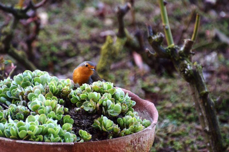 Close-up of bird perching on flower pot