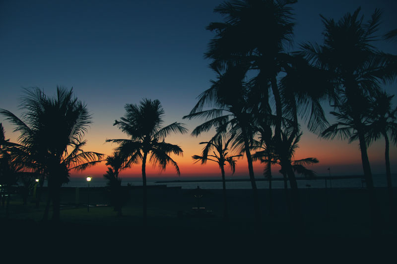 sunset-palms EyeEm Nature Lover Nature Photography Beach Beauty In Nature Coconut Palm Tree Growth Horizon Horizon Over Water Nature Nature_collection No People Outdoors Palm Tree Plant Scenics - Nature Sea Silhouette Sky Sunset Swimming Pool Tranquil Scene Tranquility Tree Tropical Climate Water