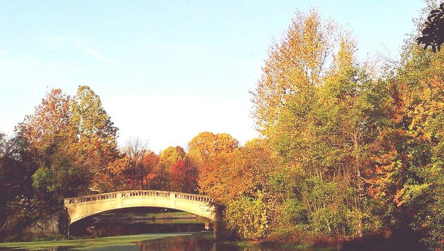 Autumn Autumn Leaves Fall Bridge Trees