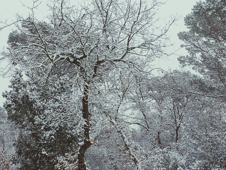No deixa de semblarme impossible que la vida tiri endavant sense tú... x mi fa mesos tot sha parat... Branch Bare Tree Outdoors Cold Temperature No People Growth Snow Tranquility Forest Freshness