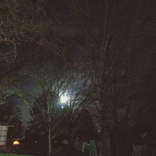 Rural Roads full moon s rising Night Tree Plant Illuminated No People Nature Moon Outdoors Tranquility Street Light Lighting Equipment Dark Street Beauty In Nature Low Angle View Branch Moonlight Sky Growth Trunk