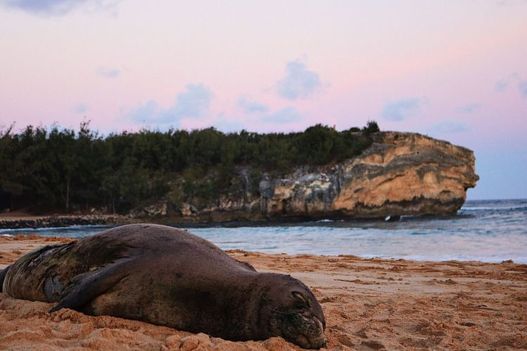 Seal Wild Endagered Species Monk Seal Nature Sea Water No People Outdoors Beach Beauty In Nature Sky Scenics Day Tree