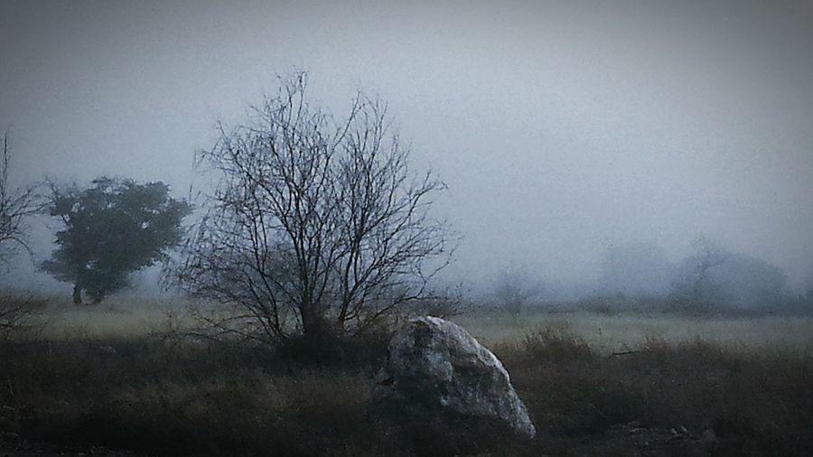 Bare Tree Fog