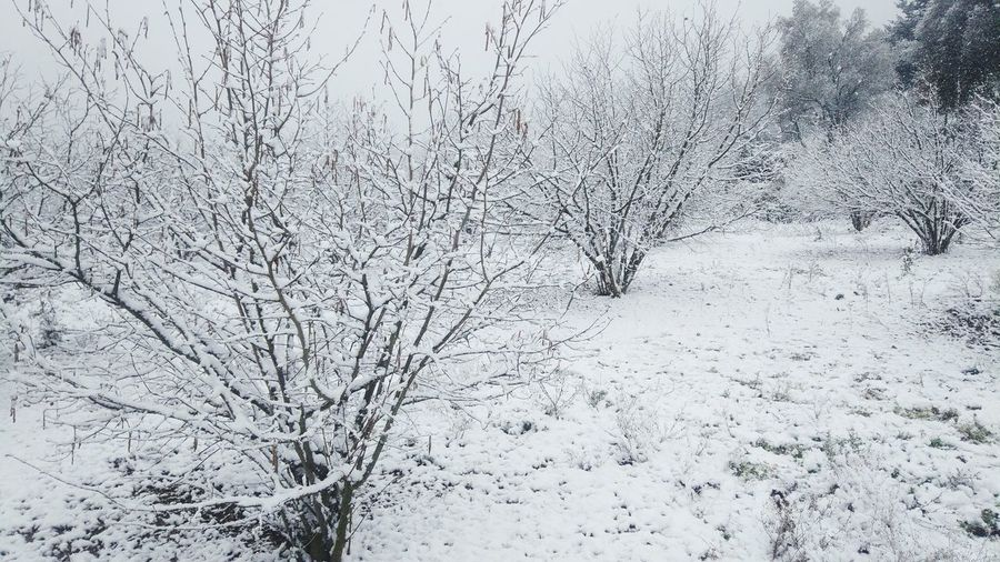 Neu Paisatge Nevat Arbres Arbres Nevats Beauty In Nature No People Outdoors Snowflake Ice Day