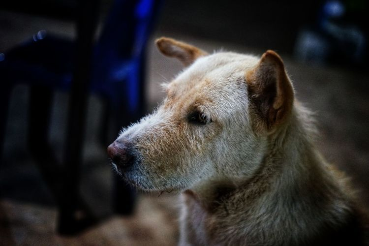 Stray Animal Stray Dog No People No Person Night Pets Dog Portrait Close-up Animal Nose Nose Animal Eye Pet Collar Animal Face Adult Animal Eye Animal Head  Ear Animal Mouth