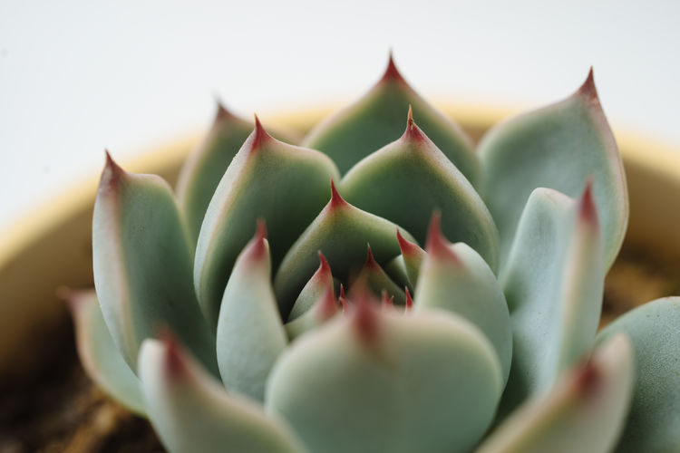 Plant Growth Succulent Plant Close-up Flower Green Color Nature Freshness Botany