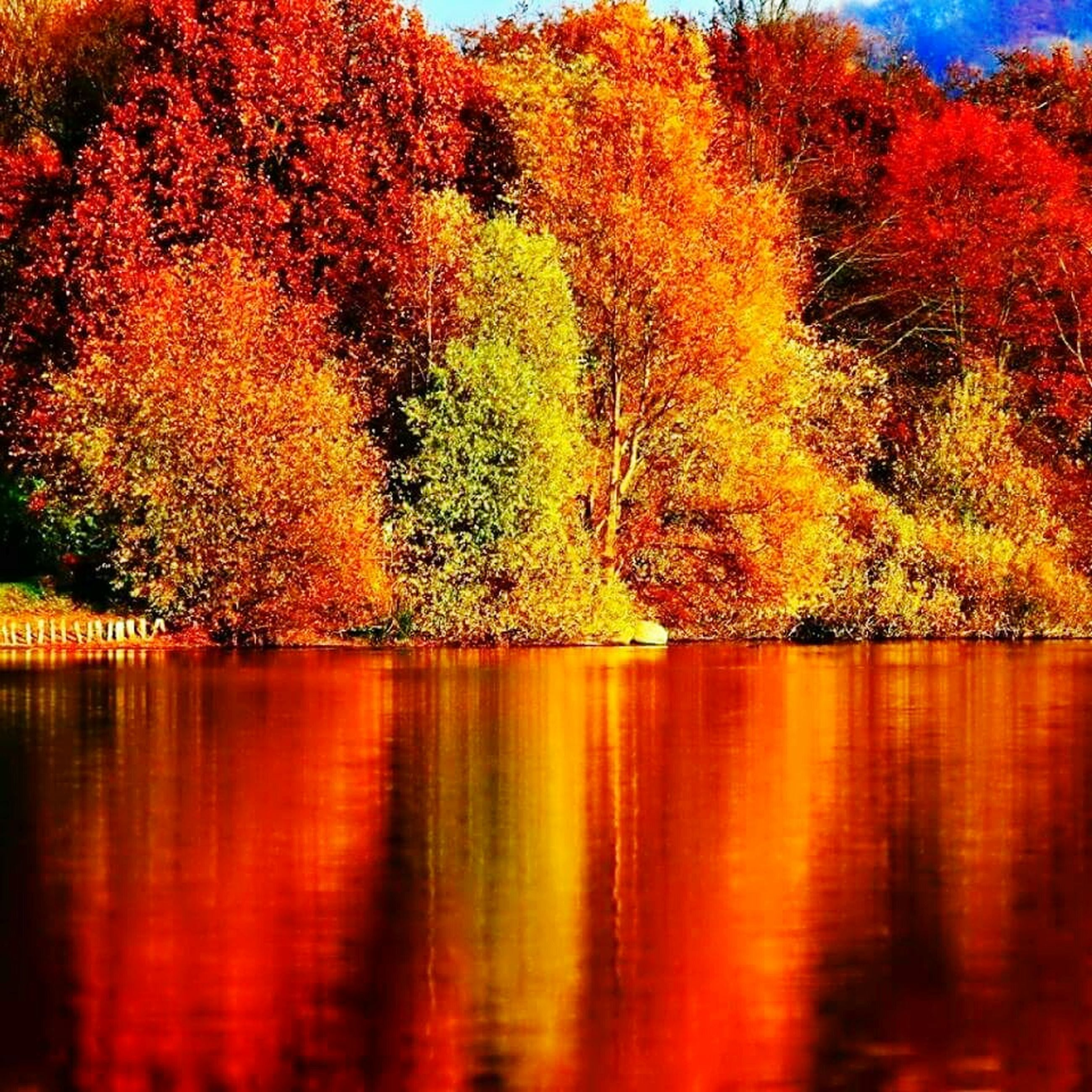 autumn, change, tree, reflection, beauty in nature, nature, leaf, scenics, tranquil scene, lake, tranquility, water, orange color, no people, outdoors, growth, day, waterfront, forest, red, maple leaf, maple