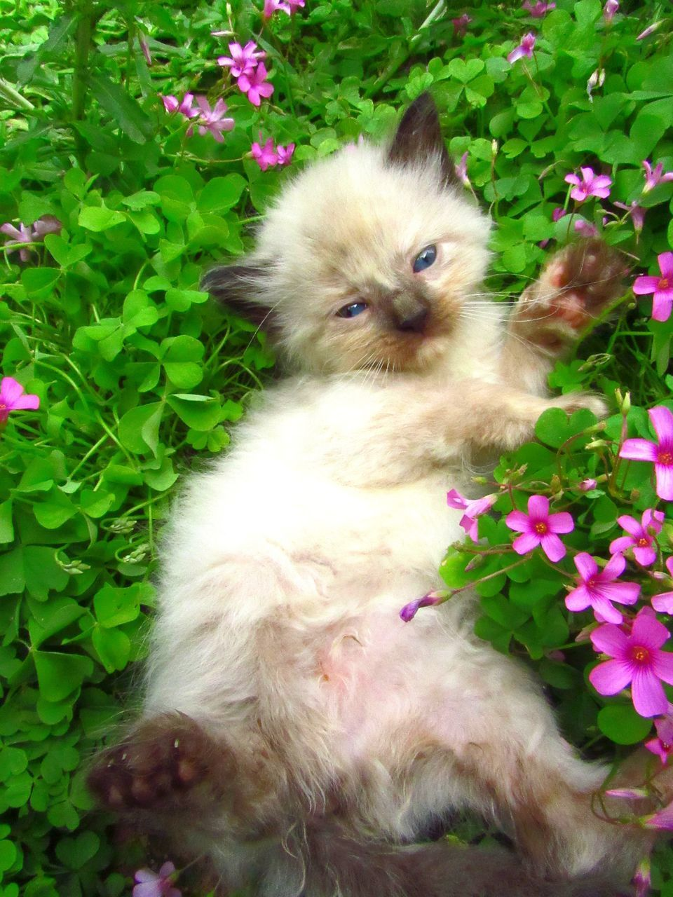 pets, domestic, mammal, domestic animals, animal themes, animal, flower, plant, flowering plant, one animal, vertebrate, high angle view, nature, no people, plant part, cat, leaf, dog, canine, domestic cat