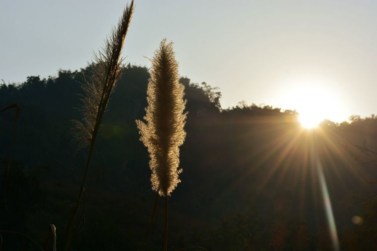 Sunlight Sunset Beauty In Nature Tree Sky Nature No People Scenics Growth Sunbeam Sun Day Golden Plants 🌱 Outdoors North East India Indian Assam, India Road Less Travelled Adventure Kohua Bon Plants