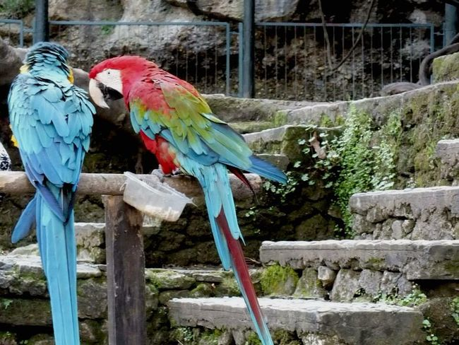 Parrot Macaw Bird Gold And Blue Macaw Perching Scarlet Macaw Animal Themes Animals In The Wild Day Outdoors Multi Colored Animal Wildlife Tree No People Nature Beauty In Nature EyeEm Best Shots EyeEm Nature Lover Eye4photography