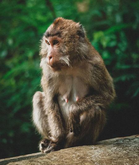 A monkeyyyy