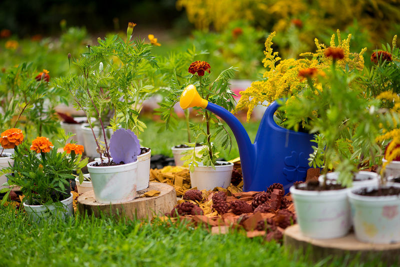 Autumn Garden Composition Flower Pot Green Garden Beauty In Nature Blue Close-up Day Downhill Field Flower Flower Head Flower Pots Fragility Freshness Front Or Back Yard Grass Green Color Growth Nature No People Outdoors Plant Selective Focus Water Can