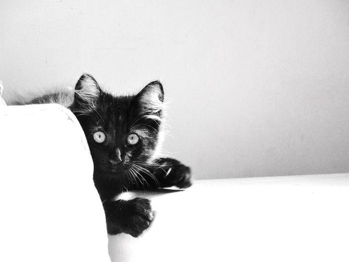 Sushi Cat BLackCat Kitten Cute