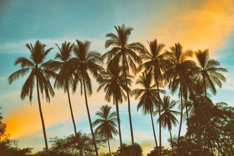 Low Angle View Of Palm Trees At Beach