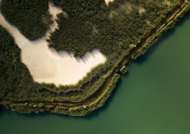 High angle view of plant in river