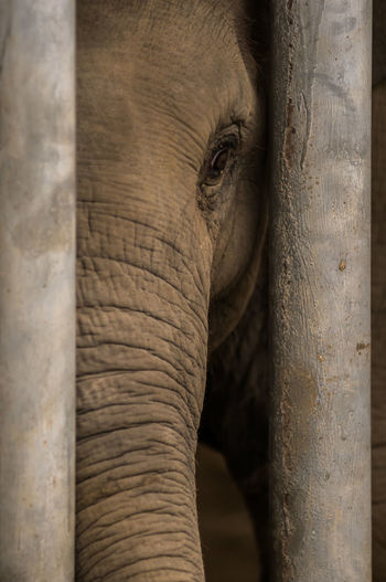Elephant seen through tree trunk
