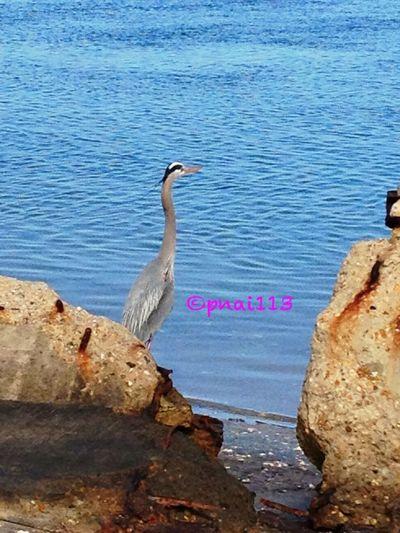 A Day At The Beach EyeEm Nature Lover EyeEm Best Shots Eye Em Best Shots -Landscapes