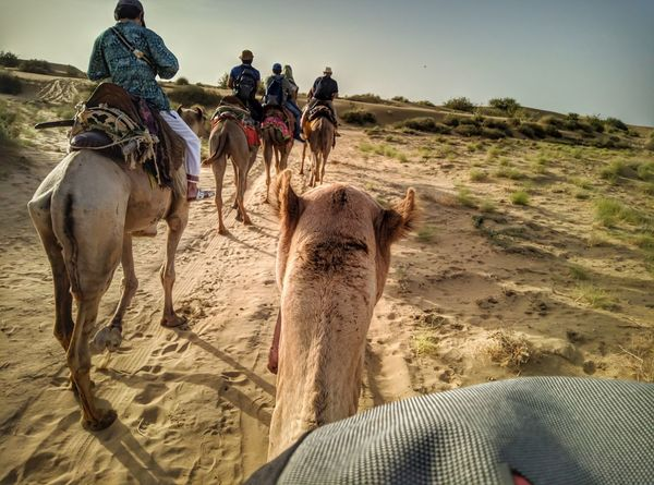 Sand Dune Desert Sand Togetherness Riding Adventure Sky Travel Camel Rajasthan Turban Indian Subcontinent North Africa Working Animal Saddle Safari Arid Climate Herd Group Of Animals Pyramid Egyptian Culture #urbanana: The Urban Playground Be Brave