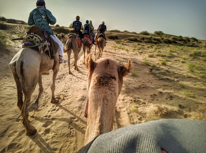 Sand Dune Desert Sand Togetherness Riding Adventure Sky Travel Camel Rajasthan Turban Indian Subcontinent North Africa Working Animal Saddle Safari Arid Climate Herd Group Of Animals Pyramid Egyptian Culture #urbanana: The Urban Playground Be Brave Humanity Meets Technology