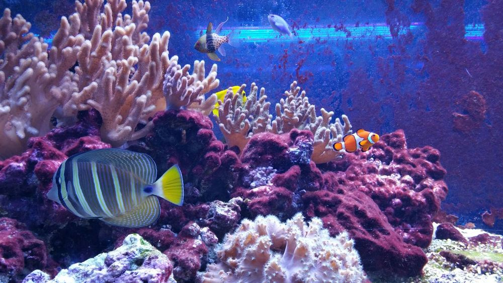 Animals Life Aquarium Fish Whater Colors The Purist (no Edit, No Filter) Experience True Colors Nature shotting with Samsung Galaxy Note 4
