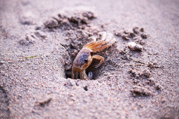 2015  Beach Crab Day Hermit Crab Jamaica Montego Bay Nature One Animal Sand カニ ジャマイカ ビーチ モンテゴベイ 砂