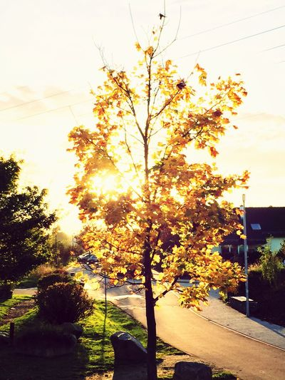 Sunset #sun #clouds #skylovers #sky #nature #beautifulinnature #naturalbeauty #photography #landscape Autumn Cloudporn #skyporn #beautiful #bestskysever Enjoying The Sun Colour Of Life