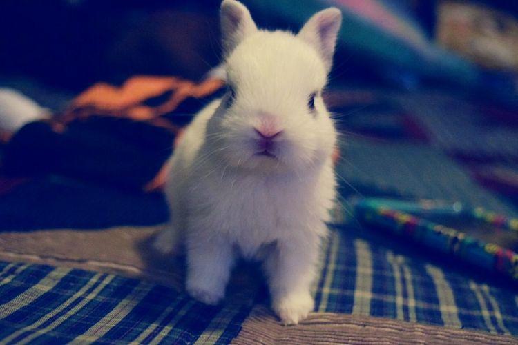 Eyeemphoto Bunny 🐰 Love Animals Relaxing Beautiful White Alert Minibunny Pet Photography  Pet Lover Pet Love