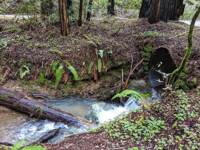 Culvert waterfall. Flowing forest water. Downed tree barrier. Background. Stream Culvert Black Ribbed Rig Stream Flowing Lig Downed Tree Barrier Natural Zen Falling Water Banks Redwood Trees Meandering Water Tree Low Section Growing Woods Blooming Tree Trunk Bark Plant Bark Branch Sunrays Mushroom Young Plant Growth