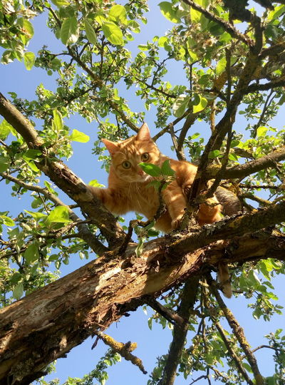 One Animal Animal Themes One Animal Animal Themes Tree Low Angle View No People Animal Wildlife Branch Nature Sky Mammal Day Vertical Outdoors Cat♡ Little Hunter